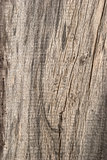 Old weathered wooden board