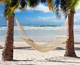 Hammock  In The Tropical Beach
