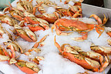 Cooked Dungeness Crabs on Ice