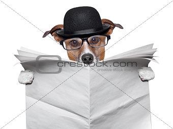 British dog reading