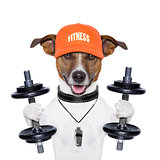 funny fitness dog