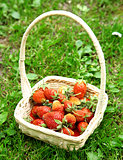 Fresh strawberries in white basket on green grass