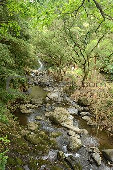 Water stream in Maui, Hawaii