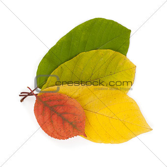 Autumn color leaves