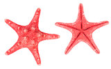 Two red starfishes