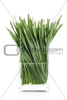 Green grass in glass vase
