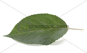 Green apple leaf