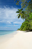 Paradise Beach Seychelles Indian Ocean