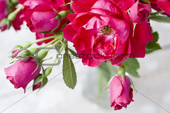 Bouquet of pink roses in a glass vase on a white background