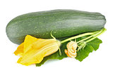 fresh zucchini with green leaves and flower
