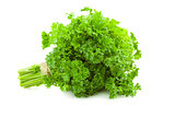 Bunch of fresh Parsley /  isolated on white