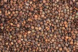 Abstract background of dried brown french lentils