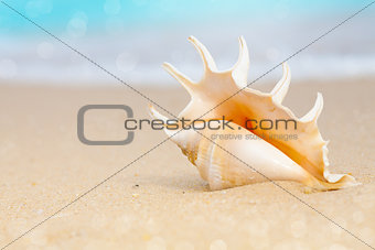 seashell on beach sand