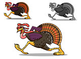 Running turkey bird