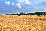 cut wheat field
