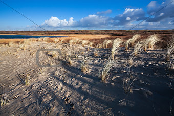 sand dunes in North Holland