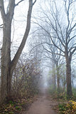 narrow path in misty day