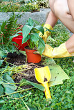 gardening with rubber yellow gloves