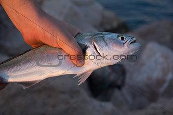 Hand holding fish