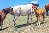 horse mother and foal