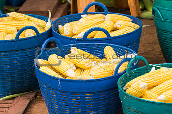 Fresh corn in basket