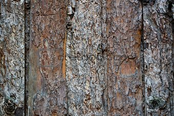 Old wooden fence with bark texture