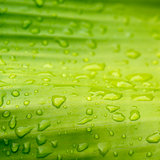 Natural green with water drops