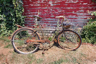 Old Rusty Bicycle with Basket of Lavender Flowers
