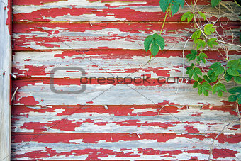 Old Red Barn with Peeling Paint and Vines