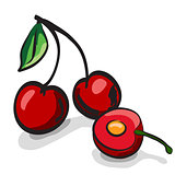Cherry fruits sketch drawing vector set