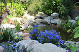 Blue Flowers and Stream