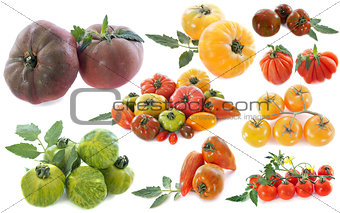 ancient varieties of tomatoes