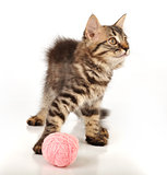 cute little kitten with a wool ball