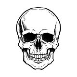 Black and white human skull with lower jaw