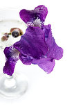 Violet Iris flower in a glass.