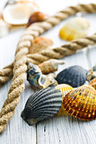 sea shells and rope