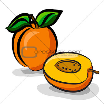Apricot fruits sketch drawing vector set
