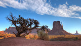 Monument Valley behind dry tree