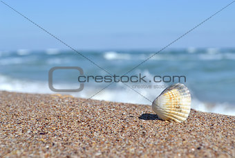 Shell, Beach, Sunrise, Sea