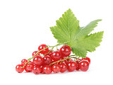 fresh ripe redcurrant with leaf