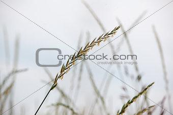 crops in a field