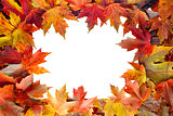 Colorful Maple Tree Fall Leaves Border