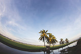 Fish eye view of rice fields with blue sky