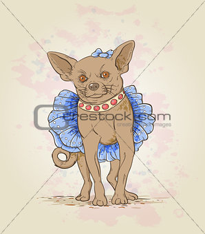 Small decorative dog