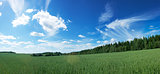 Panoramic Landscape with Green Field and Blue Sky