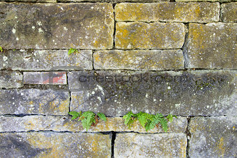 Old Stacked Stone Wall with Ferns