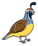 Cartoon California Quail