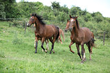 Batch of horses running on pasture