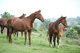 Batch of horses standing on pasturage