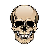 Colored Human Skull with Jaw